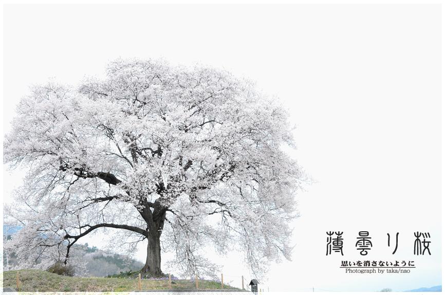 DSC_1598-2.jpg
